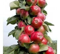 Яблоня колоновидная в сортименте