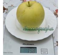 Яблоня Россошанское вкусное (Изумительное)